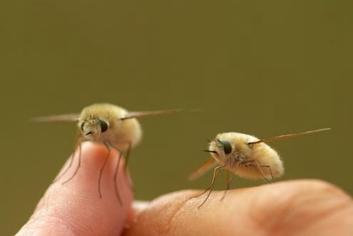 【速報】オーストラリアでマジでヤバイ 虫 発見される これ久々にキタわ  [876811395]YouTube動画>8本 ->画像>78枚