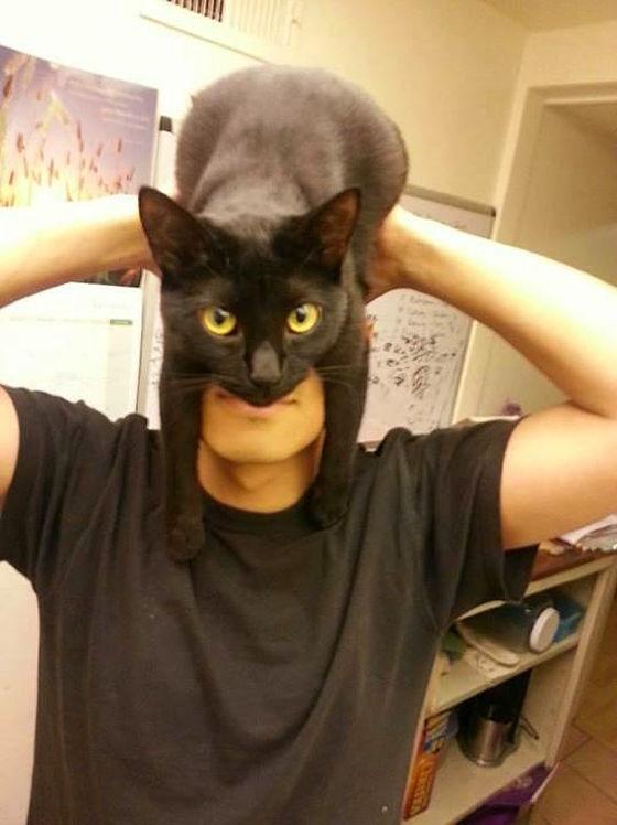 幸運(`・ω・´)黒猫を語るスレ20(´・ω・`)福招YouTube動画>3本 ->画像>741枚