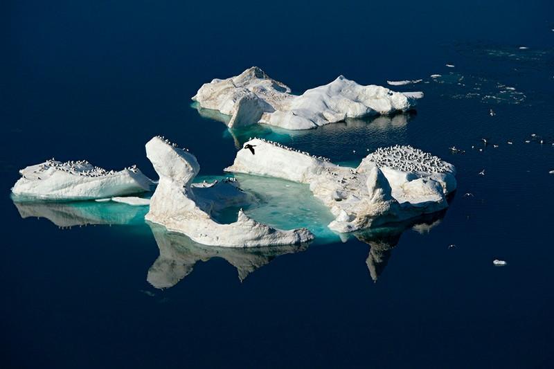ウランゲリ島の画像 p1_19