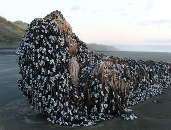 【衝撃】2011年の東日本大震災で流された漁船、とんでもない場所で発見される…(画像あり)  [679785272]->画像>26枚