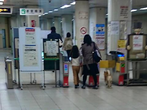 悲報】無賃乗車しようとした犬、...