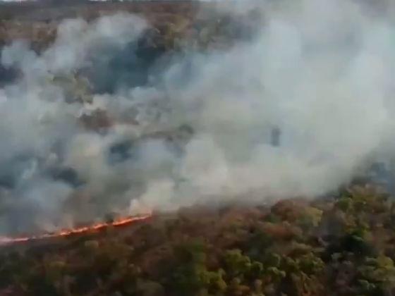 コラム】アマゾンでの過去最多級の山火事、ブラジル大統領の主導